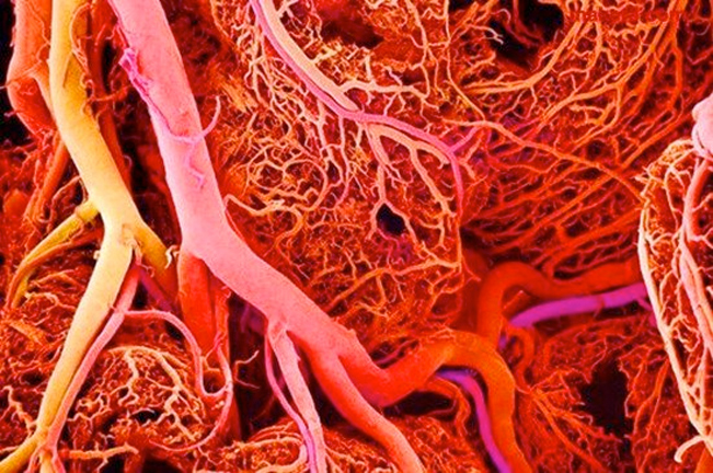 blood-vessels